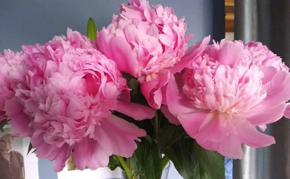 pink colored flowers