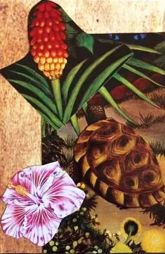 Collage of a pineapple, a turtle and a flower