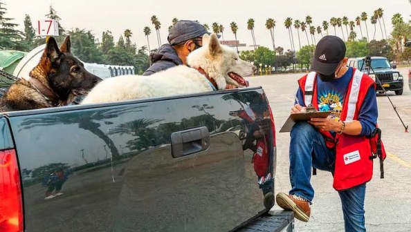 two dogs and owner being assisted by a Red Cross volunteer