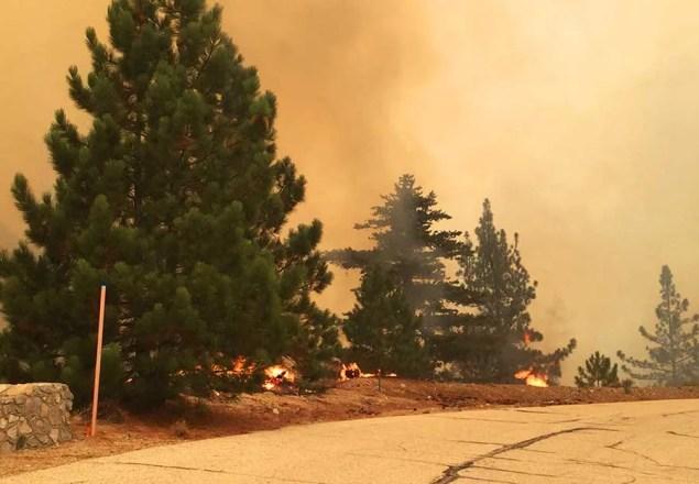 burning pine trees
