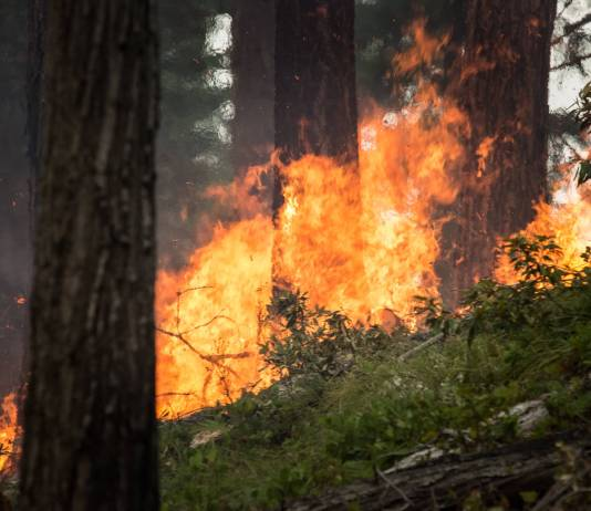 Neguse: Feds should give states more say in burn bans on U.S. lands