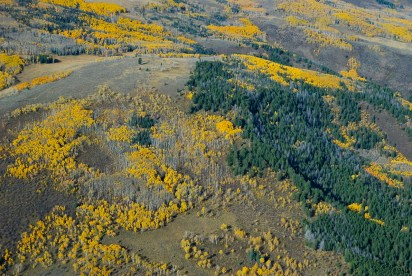 Aspen stands, interspersed with spruce and fir glades, create a visual tapestry.