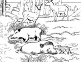 Coloriage Animaux Foret Imprimer.Dessin Animaux Foret On Log Wall