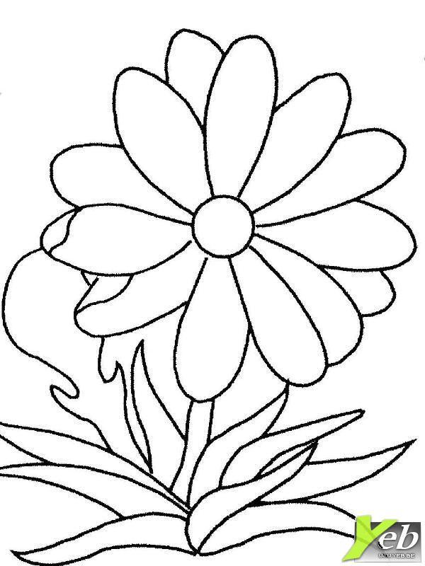 Coloriage Marguerite Facile Dessin Gratuit A Imprimer