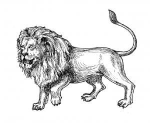 Coloriage De Lions Coloriages Pour Enfants