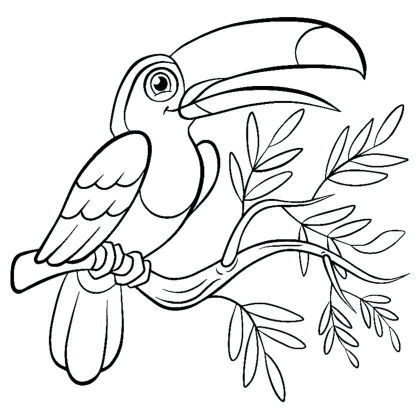 toucan  coloriage d'oiseaux  coloriages pour enfants