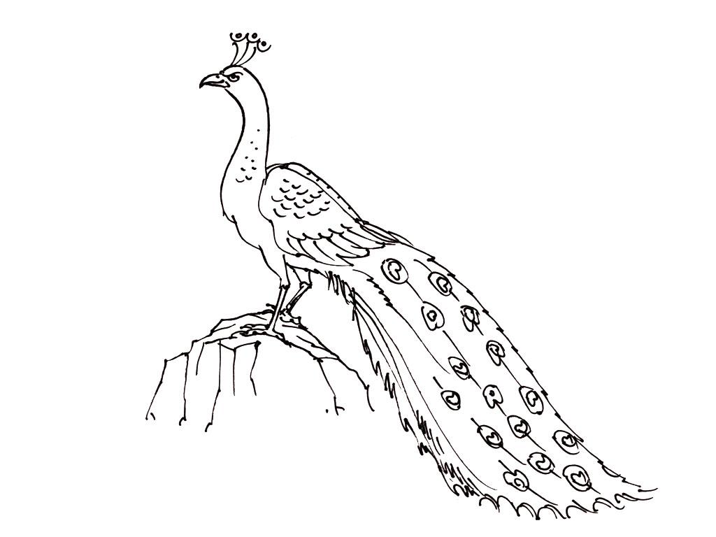 Photo D Oiseau A Imprimer Ga86