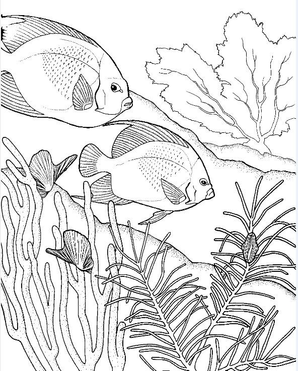 adulte coloring pages aquatiques bouquets set de 12 par emerlyearts