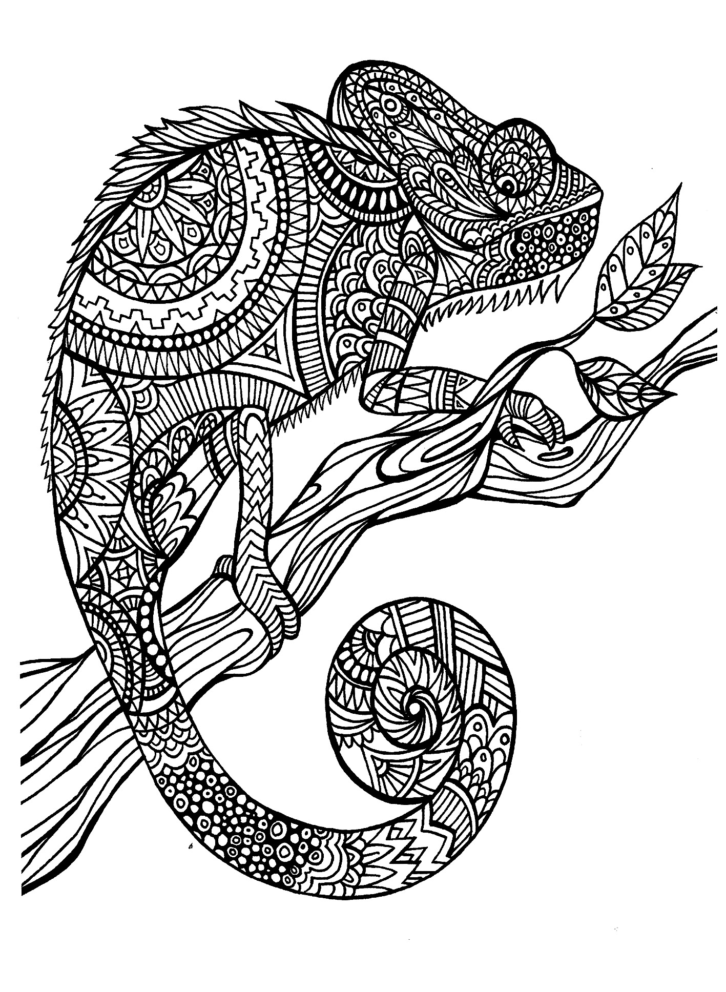 animals coloring pages for adults coloring adult cameleon patterns