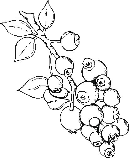 lesson plans for teachers fruits coloring pages sheets and