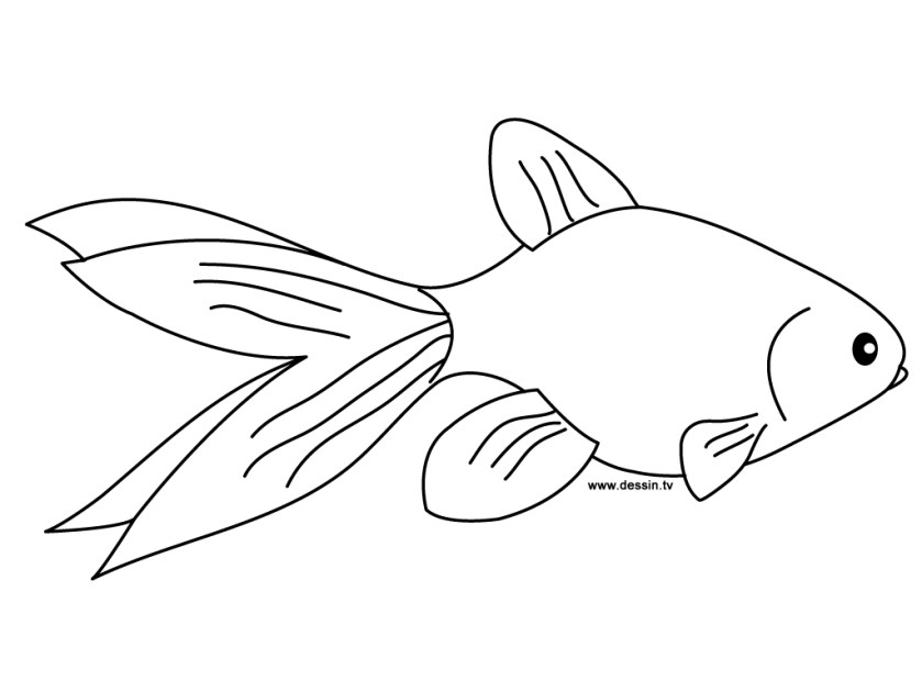 printable goldfish coloring pages  coloringme