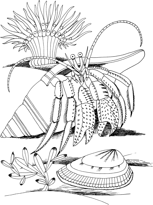 Printable Hermit Crab Coloring Pages Coloringme Com