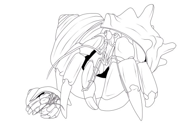 hermit crab coloring page # 75