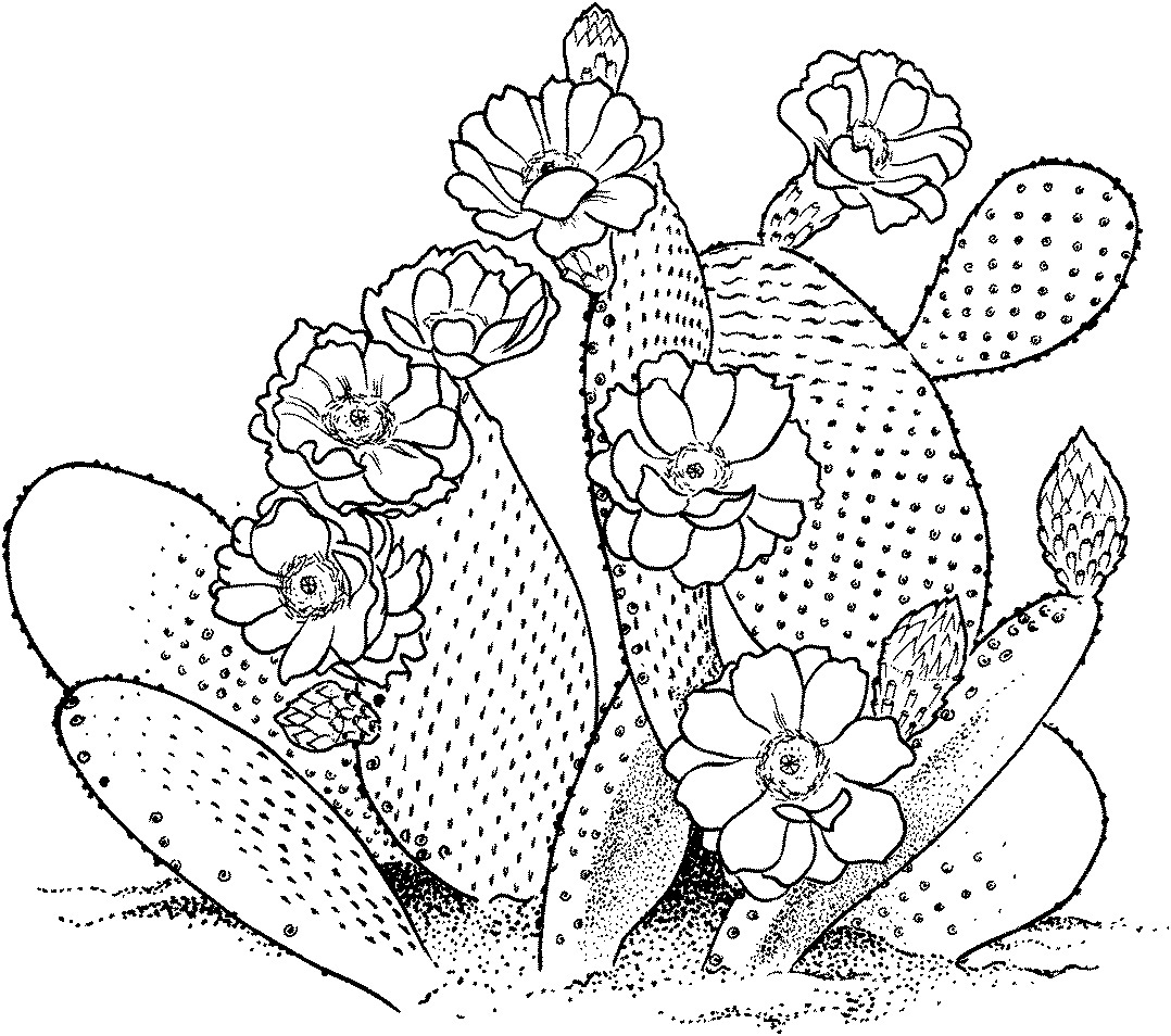 Printable Cactus Coloring Pages Coloringme Com