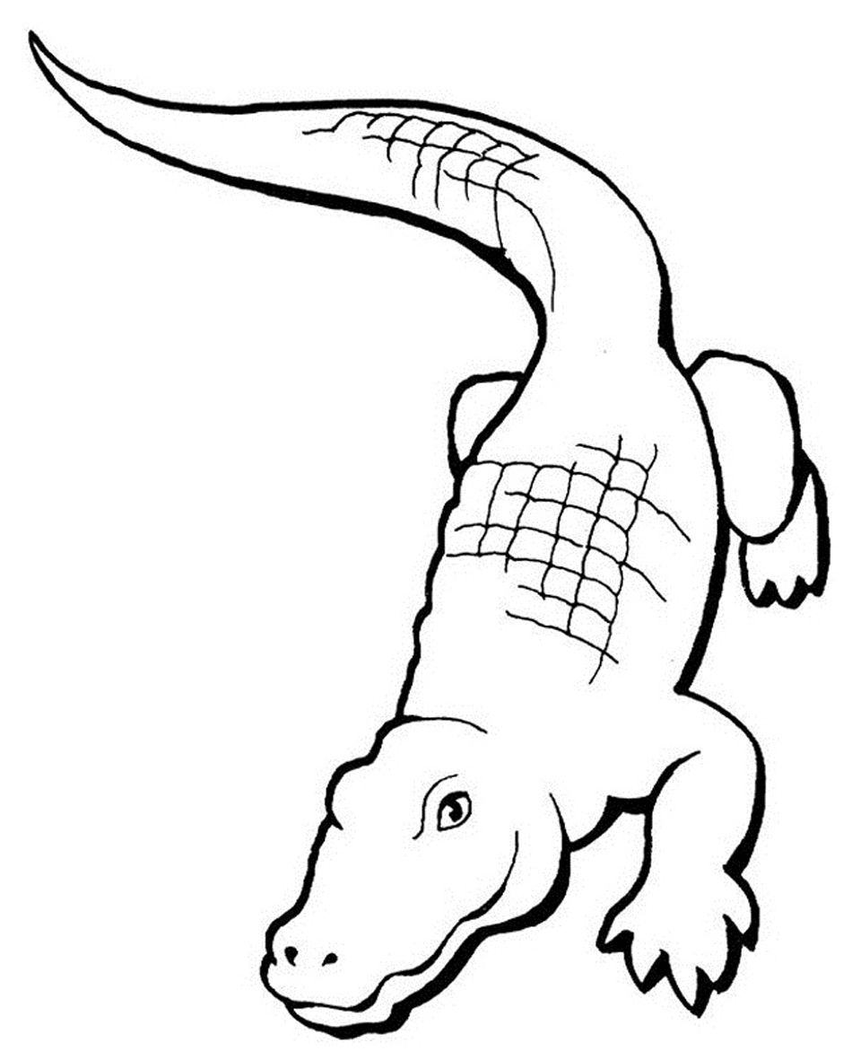 printable alligator coloring pages coloring me