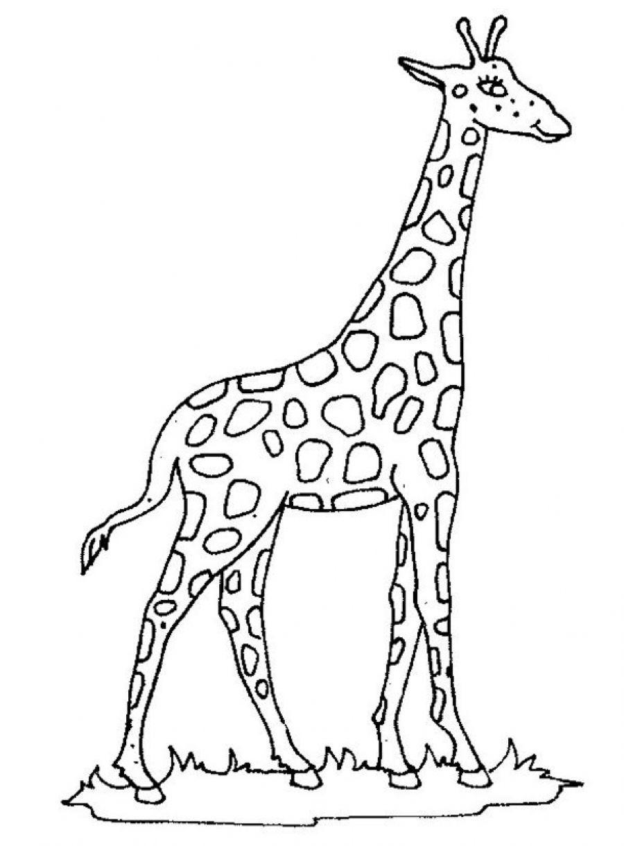 printable giraffe me