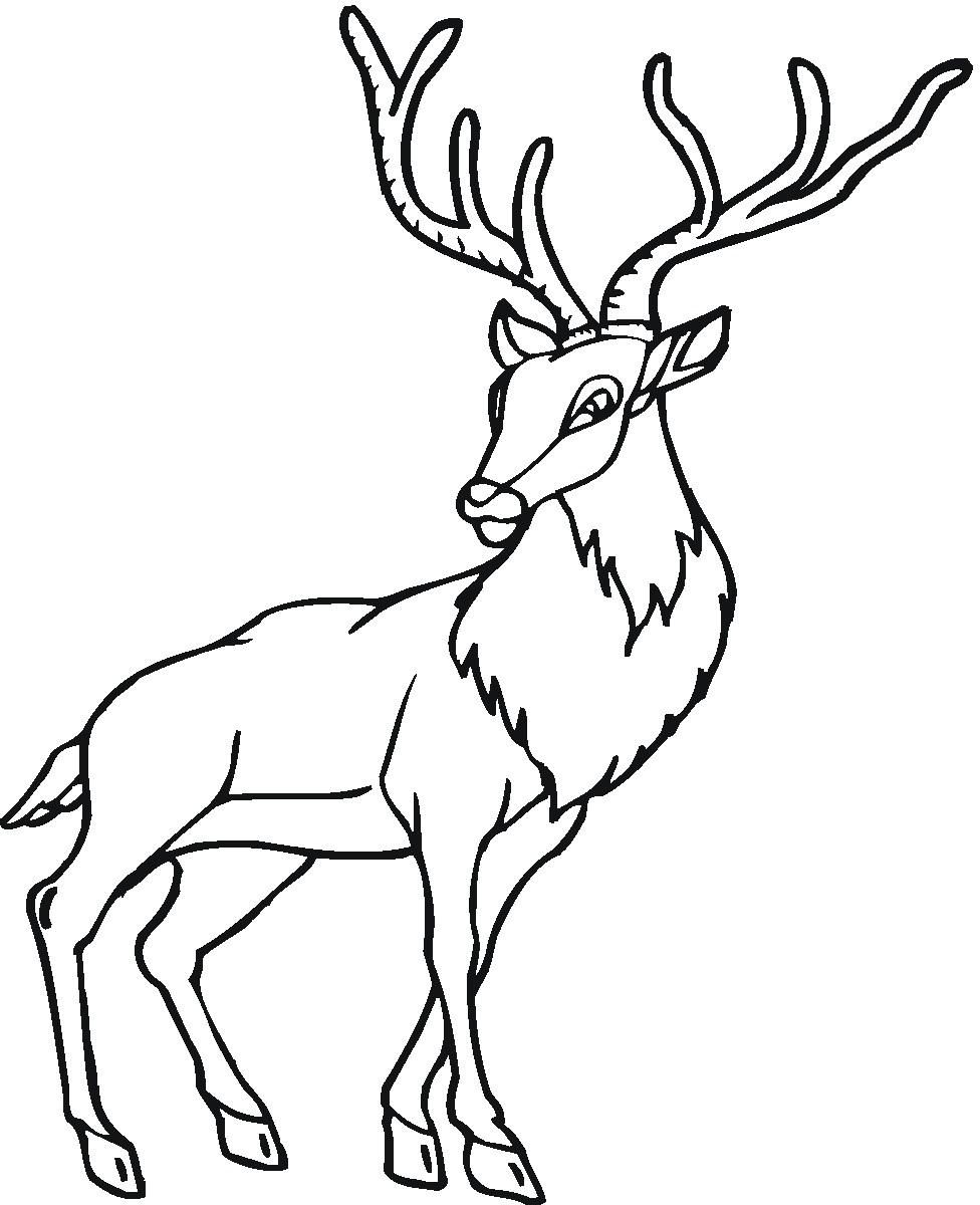 printable deer pages me