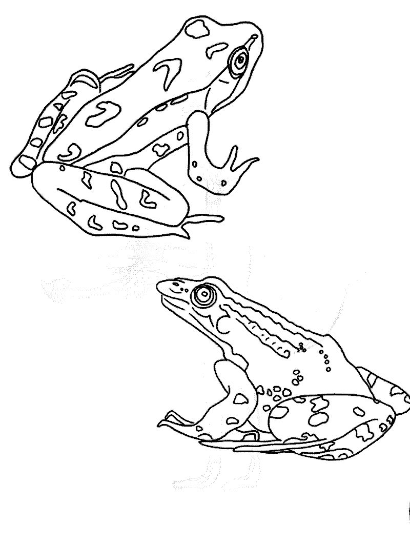 free frog coloring pages free printable frog coloring pages frog
