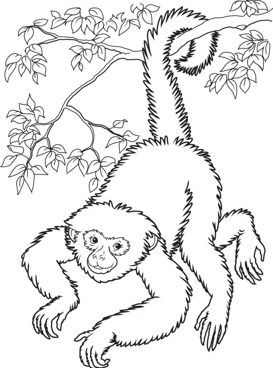 printable monkey coloring pages monkey coloring page monkey coloring