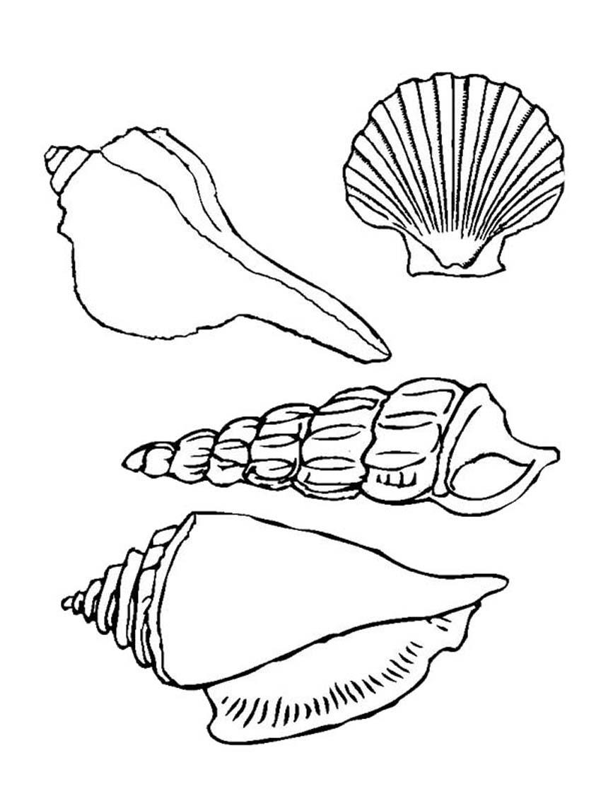 seashell coloring pages printable seashell coloring pages seashell