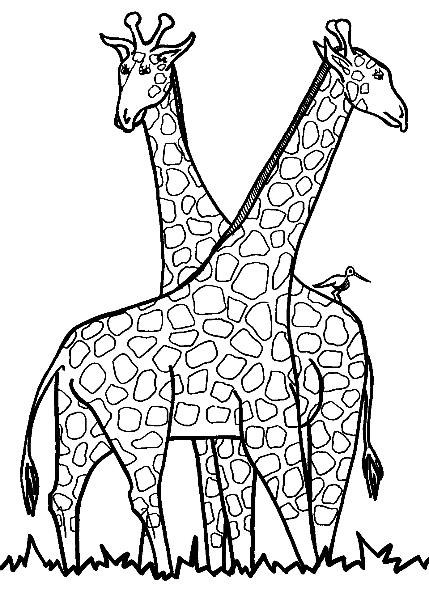 giraffe to color giraffe color page animal coloring pages color