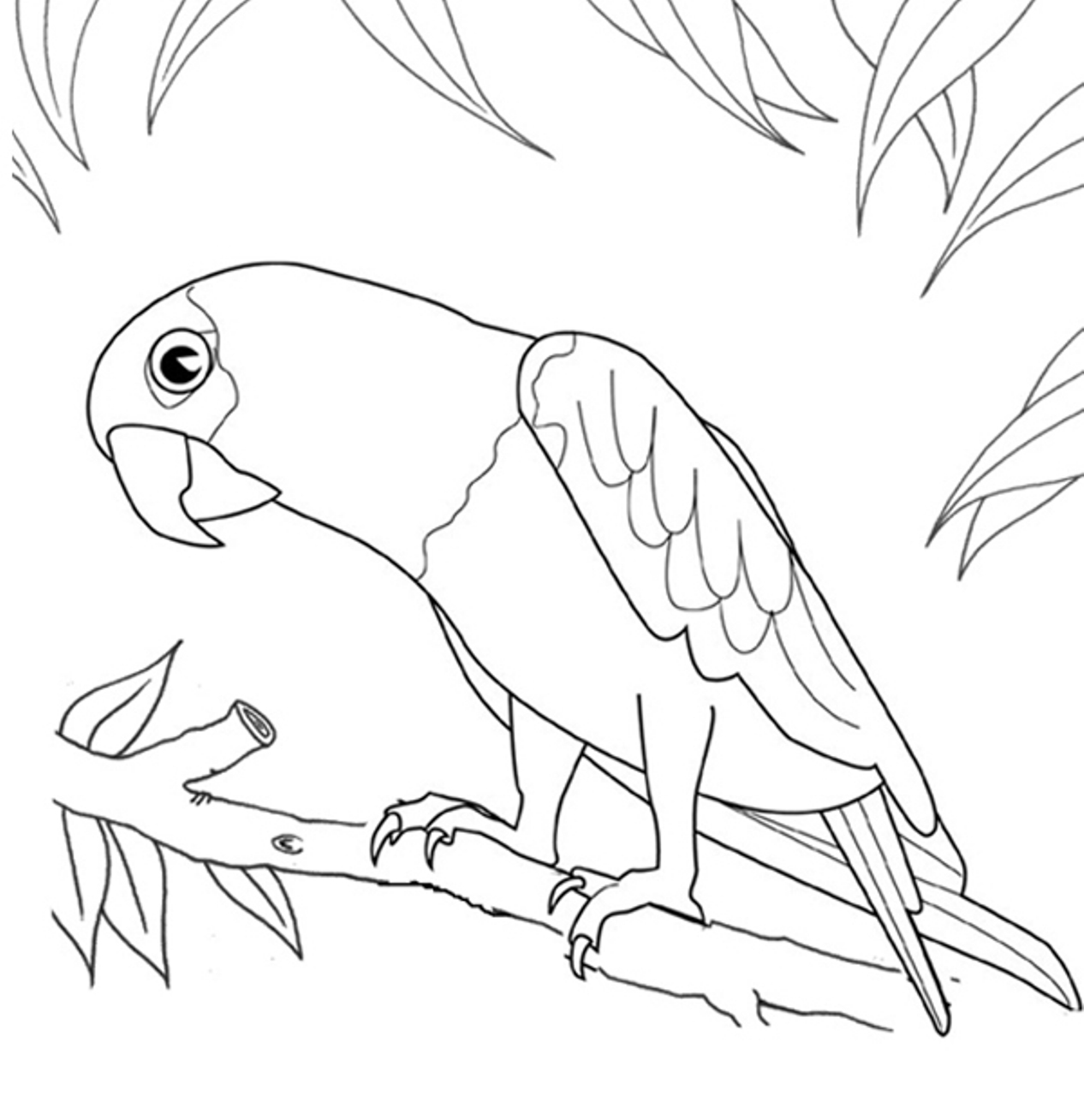 without parrot colouring