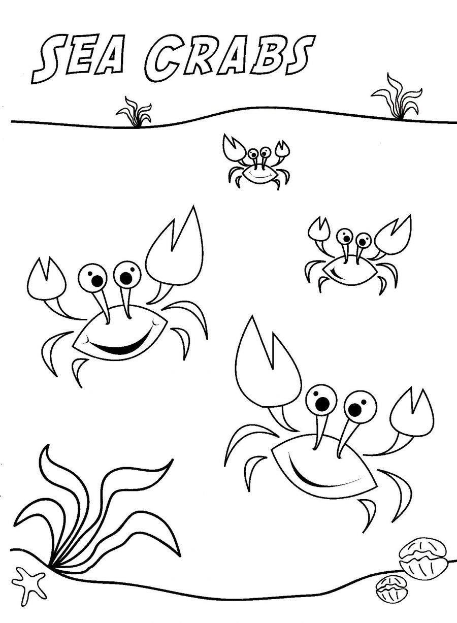 blue crab coloring page sketch template