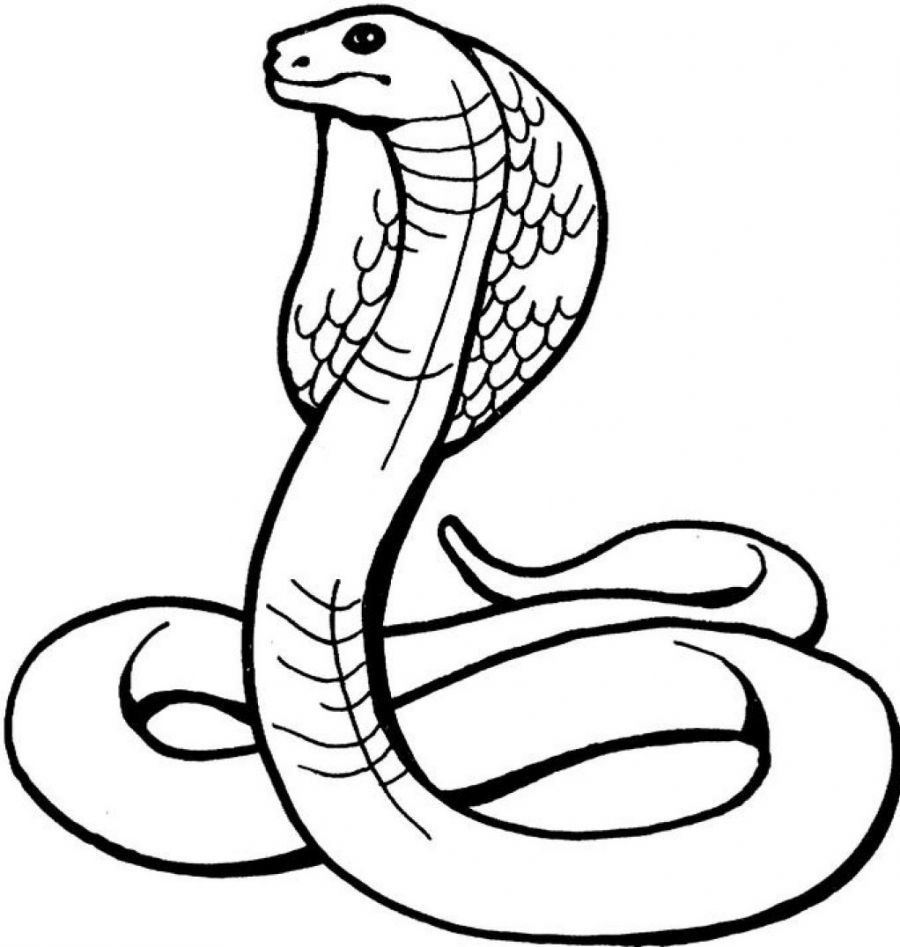 printable snake coloring pages snake coloring page snake coloring