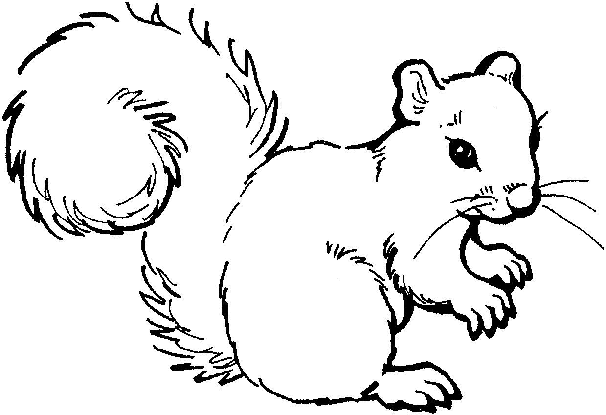 printable squirrel coloring pages coloring me