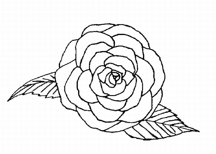coloring pages of a rose coloring me
