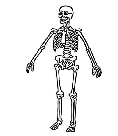 skeleton dinosaur skeleton coloring pages human skeleton coloring page