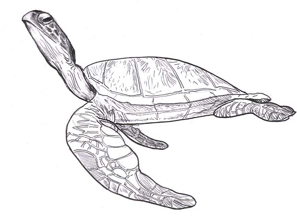 printable sea turtle coloring page coloring me