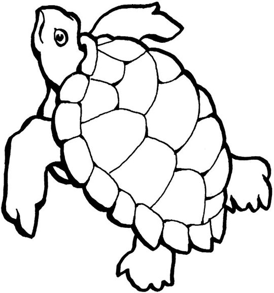 sea turtle colouring pages coloring pages draw a sea turtle sea