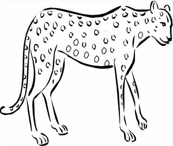 printable cheetah coloring pages coloring me