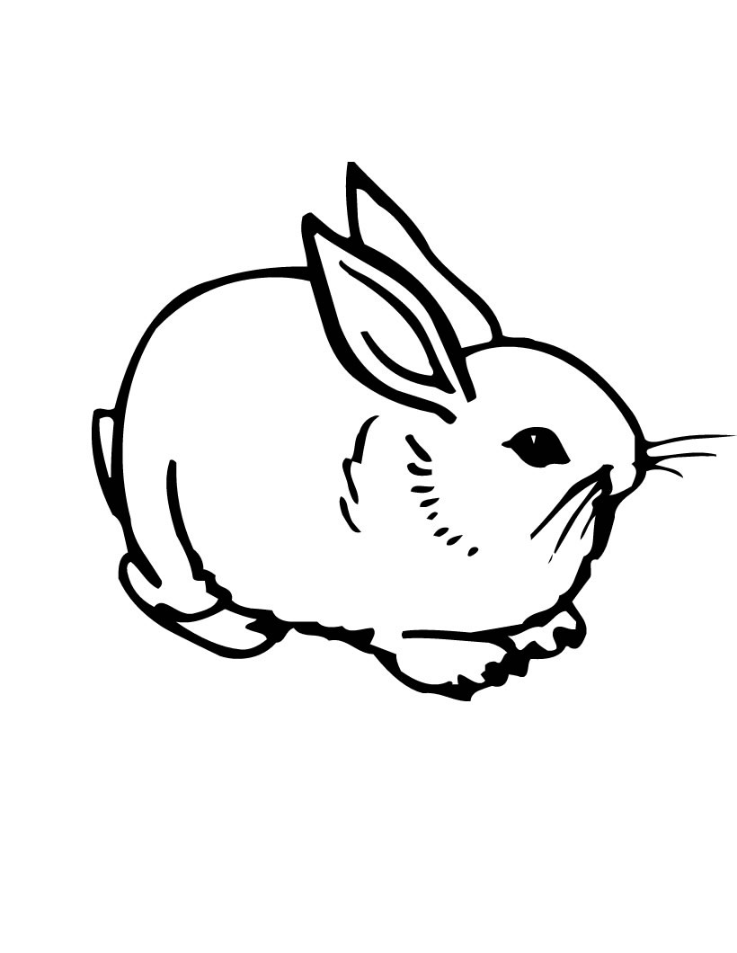 Baby Bunny Rabbit Coloring Pages | Bunny coloring pages, Rabbit ... | 1060x820