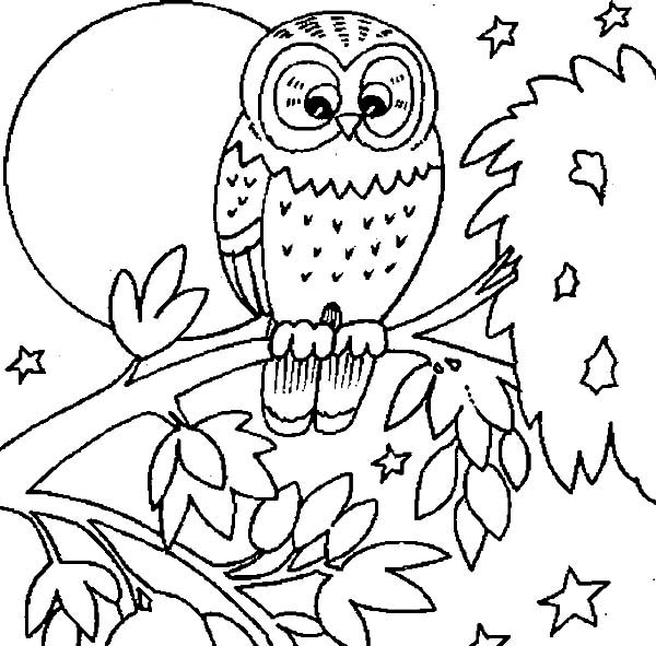 owl coloring pages printable free baby owl coloring pages owl