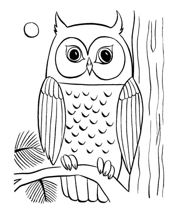 coloring pages of owls cute owl coloring pages barn owl coloring