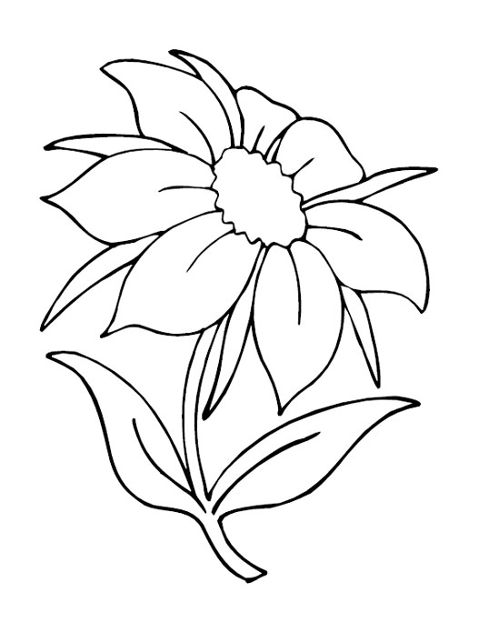 lilac flower coloring page syringa flower colouring pages