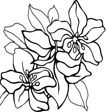 flower coloring pages coloring pages flowers printable wemakesense co