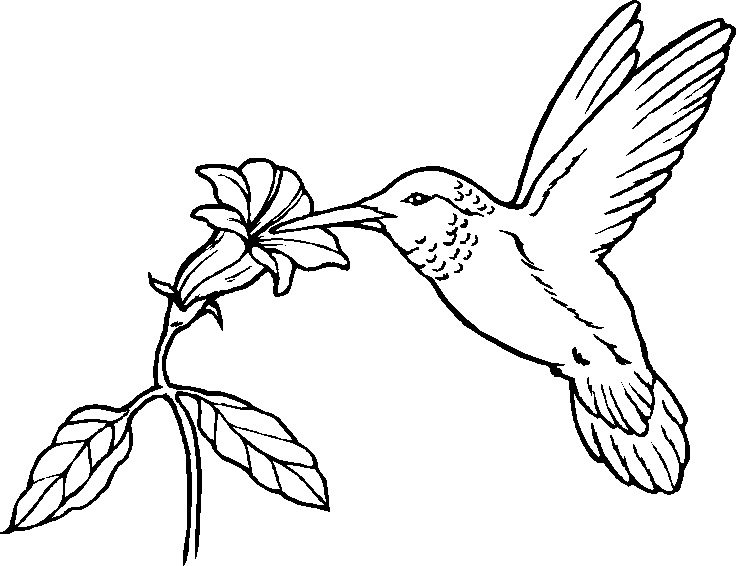 for birds coloring pages of birds free bird coloring pages