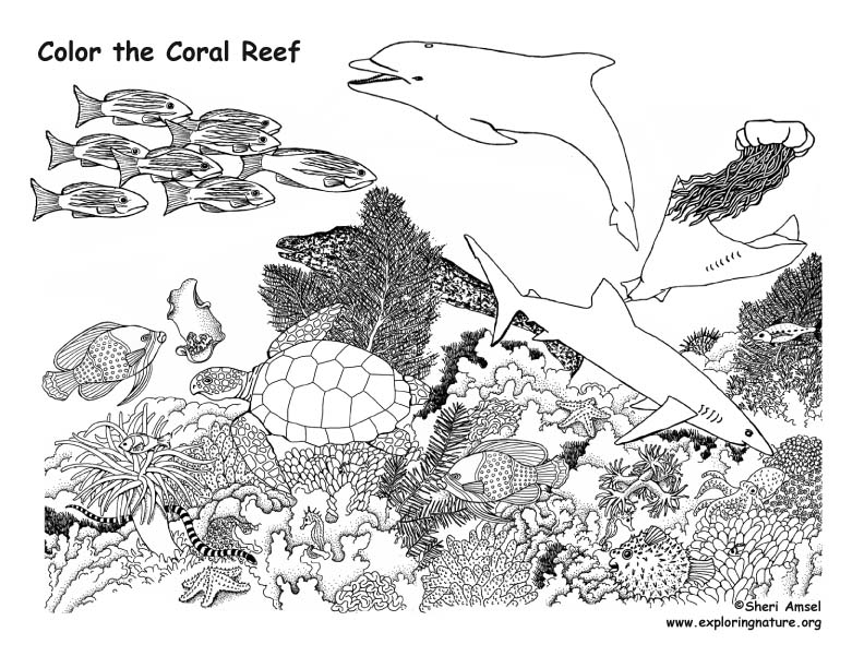 coral reef animals coloring nature