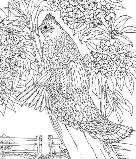 Hard Coloring Page Coloring Page Amp Book For Kids