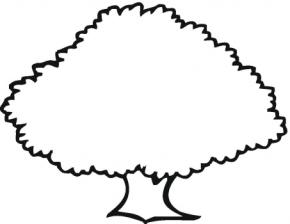 trees oak tree pine tree apple tree trees