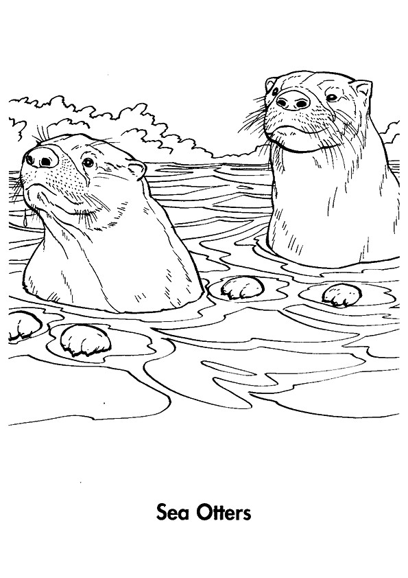 Otter Coloring Pages Books 100 Free And Printable