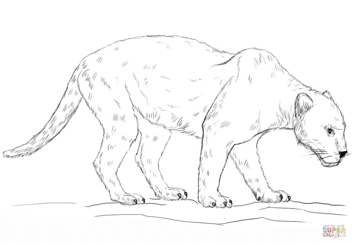 Panther Coloring Pages Amp Books