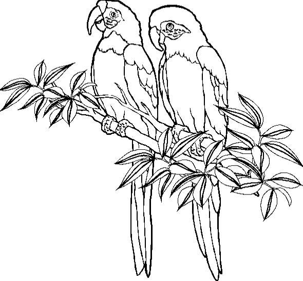 pages coloringpages1001 com