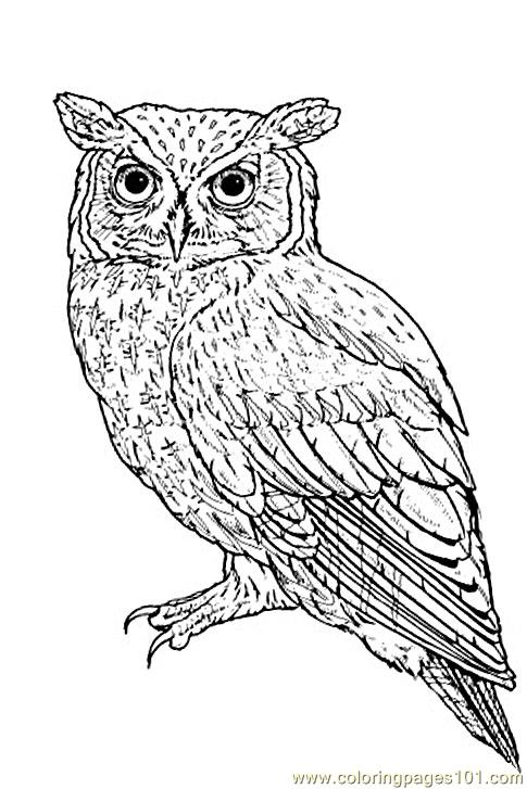 Eastern Owl Coloring Page Free Owl Coloring Pages