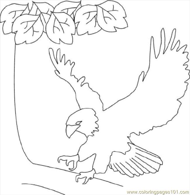 coloring pages bald eagle birds gt eagle free printable coloring