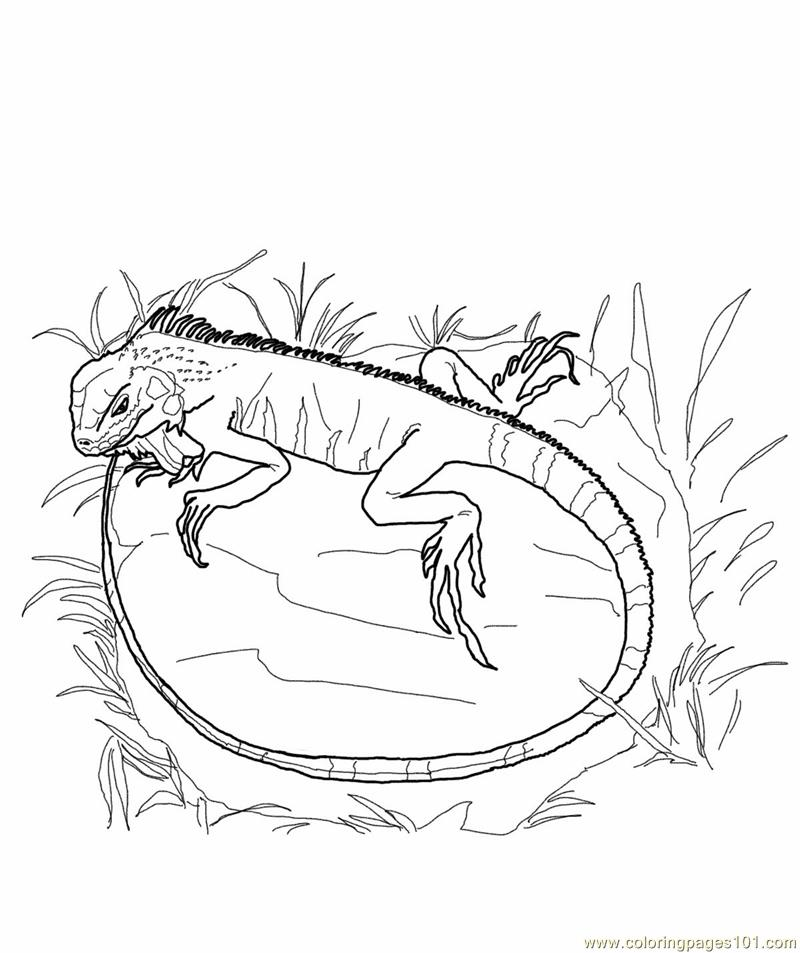 free printable page green iguana reptile gt