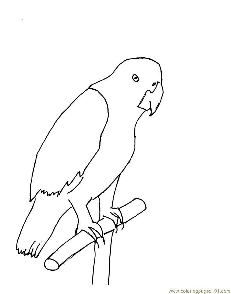 photos coloring pages parrot birds parrots free printable coloring